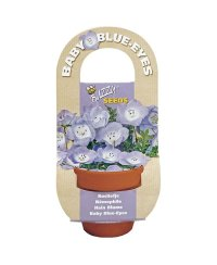Flowering Gift - Baby Blue-Eyes