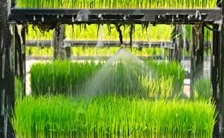 Wasser- und Nährstoff-Hydro-Vernebelung